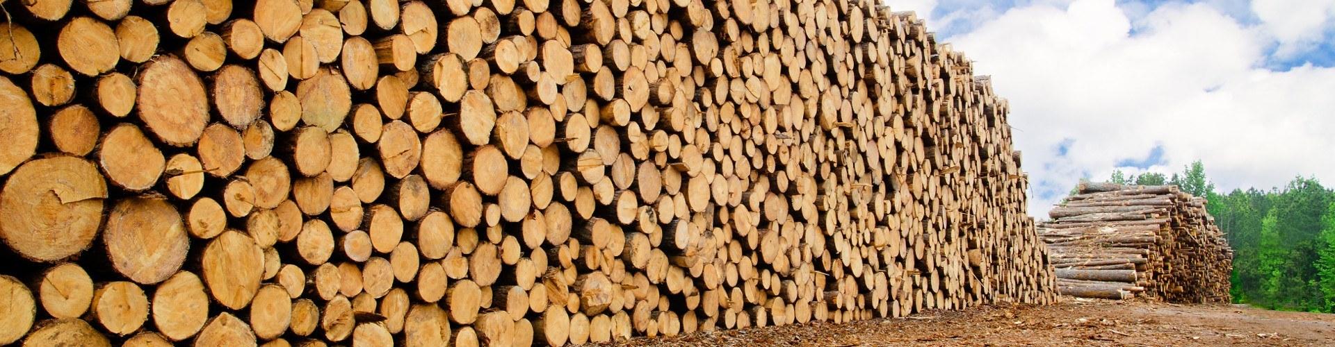 Zolotas Wood Wood Pile